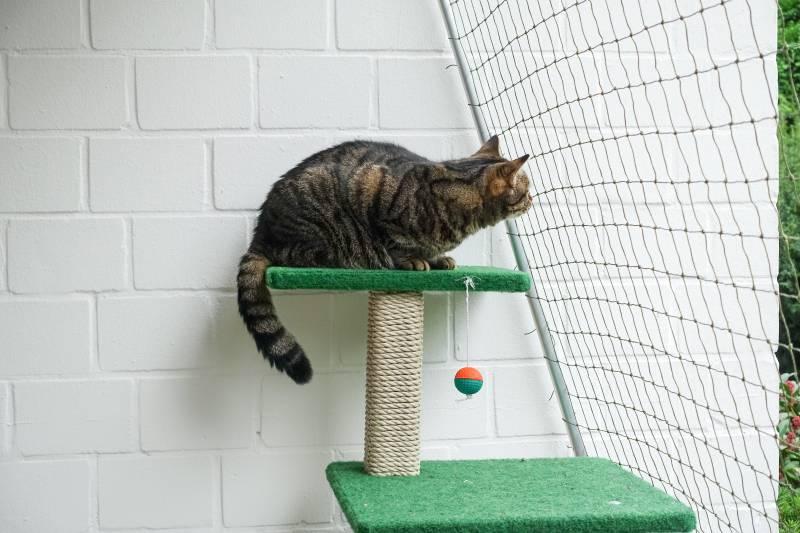 800-rgbstock-cat-net-oT7iMUe.jpg
