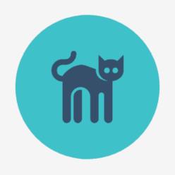 Kočičí tipy