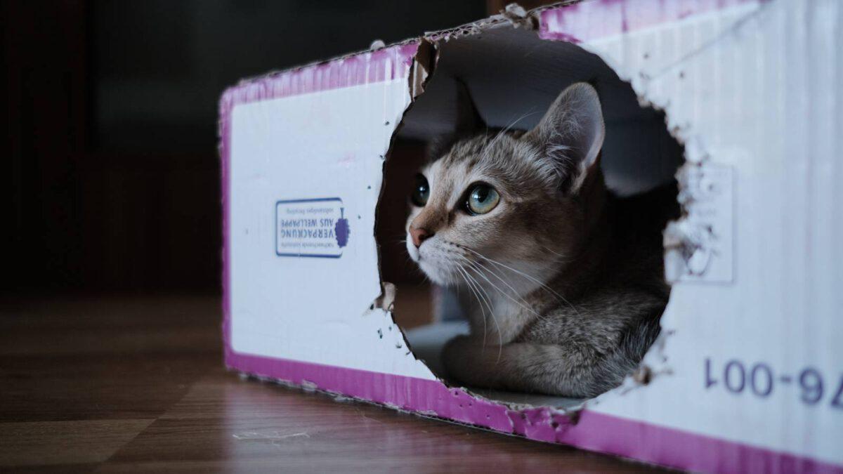 Proč kočky milují krabice? TIP#007