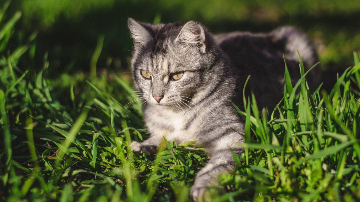 Antiparazitika pro kočky? Co s klíšťaty, blechami a dalšími komplikacemi TIP#014