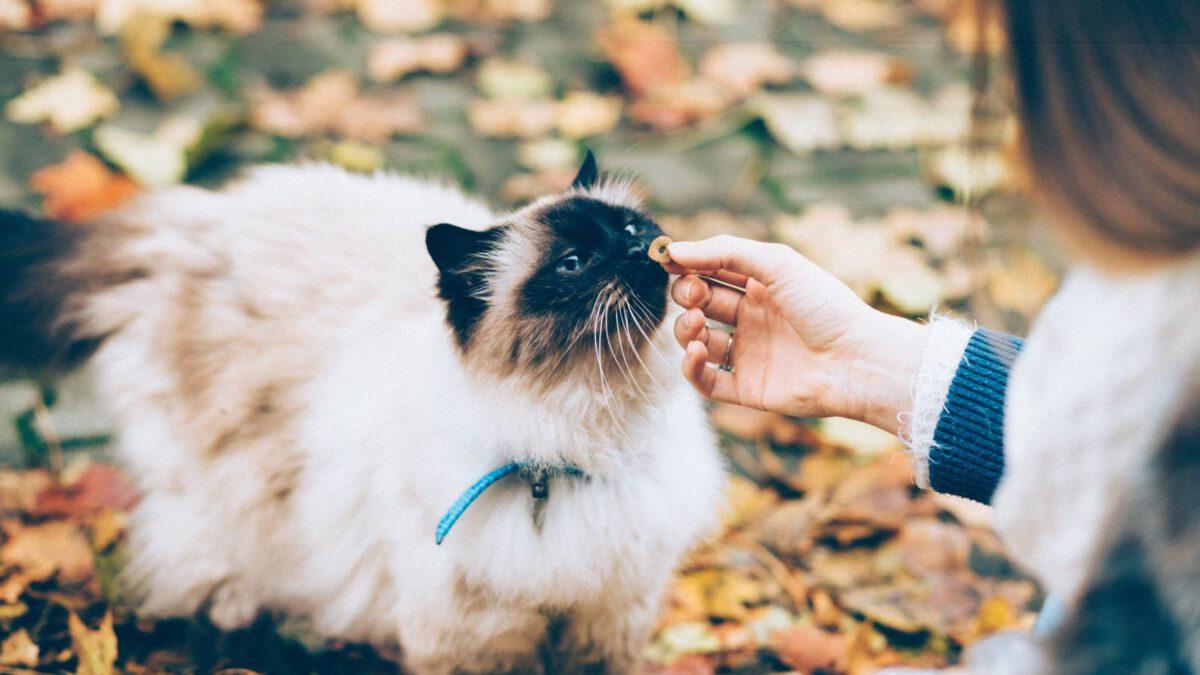 Pozná kočka sladké? TIP#015