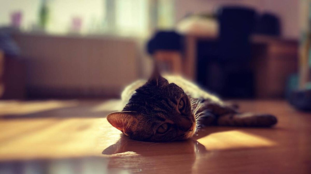 Kočky a horko TIP#024