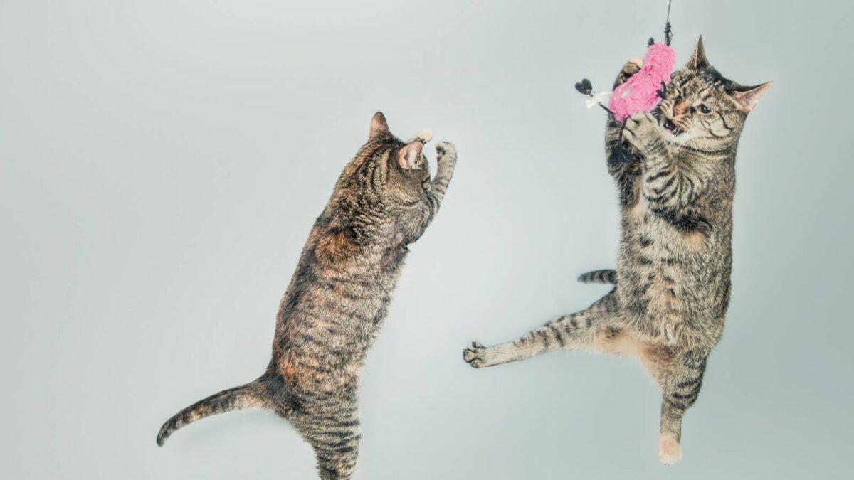 Proč mi kočka pořád skáče na nohy? TIP#027