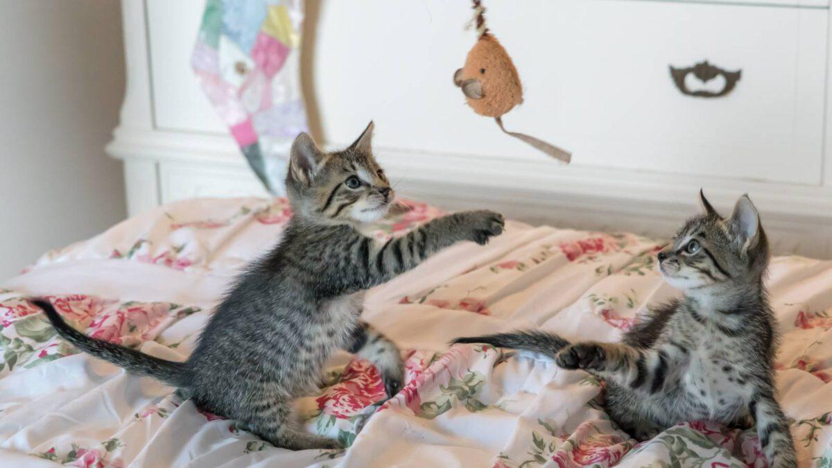 Kočičí výbava pro začátečníky TIP#030