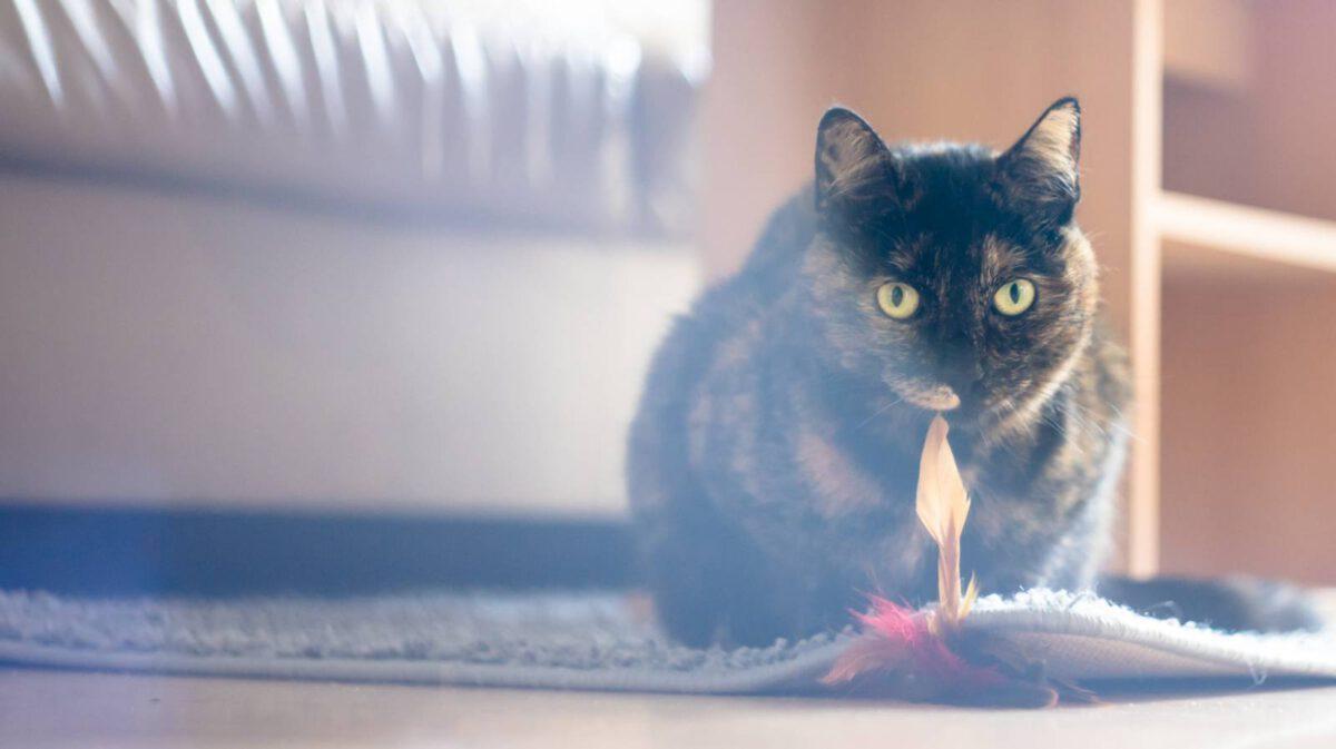 Čím kočky prospívají našemu zdraví TIP#032