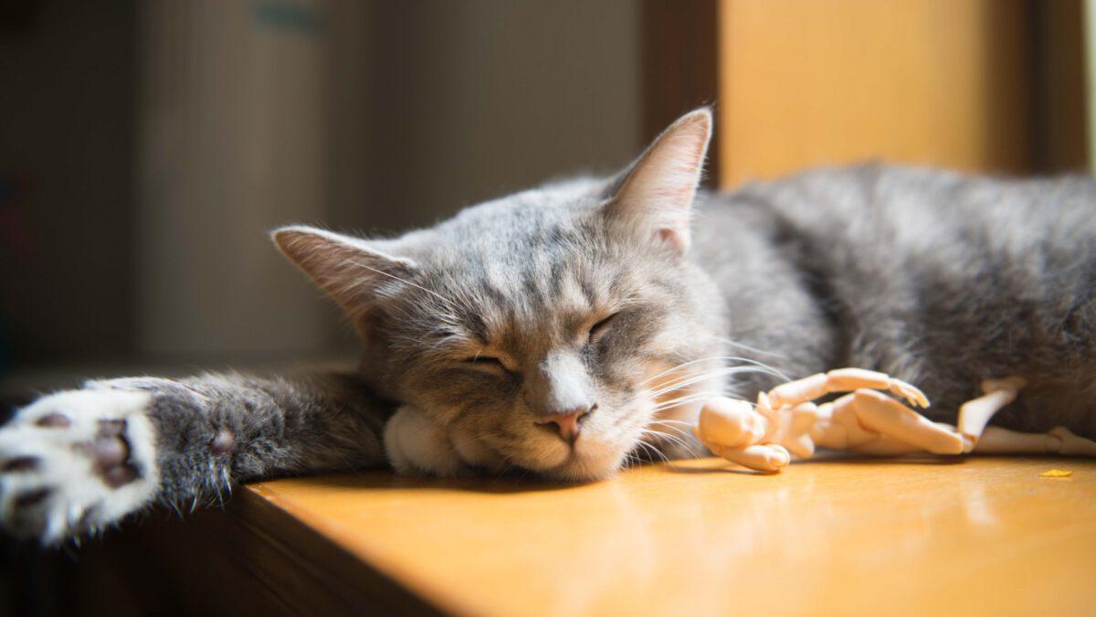 Kočičí hračky? Proč kočka potřebuje hračky? TIP#080