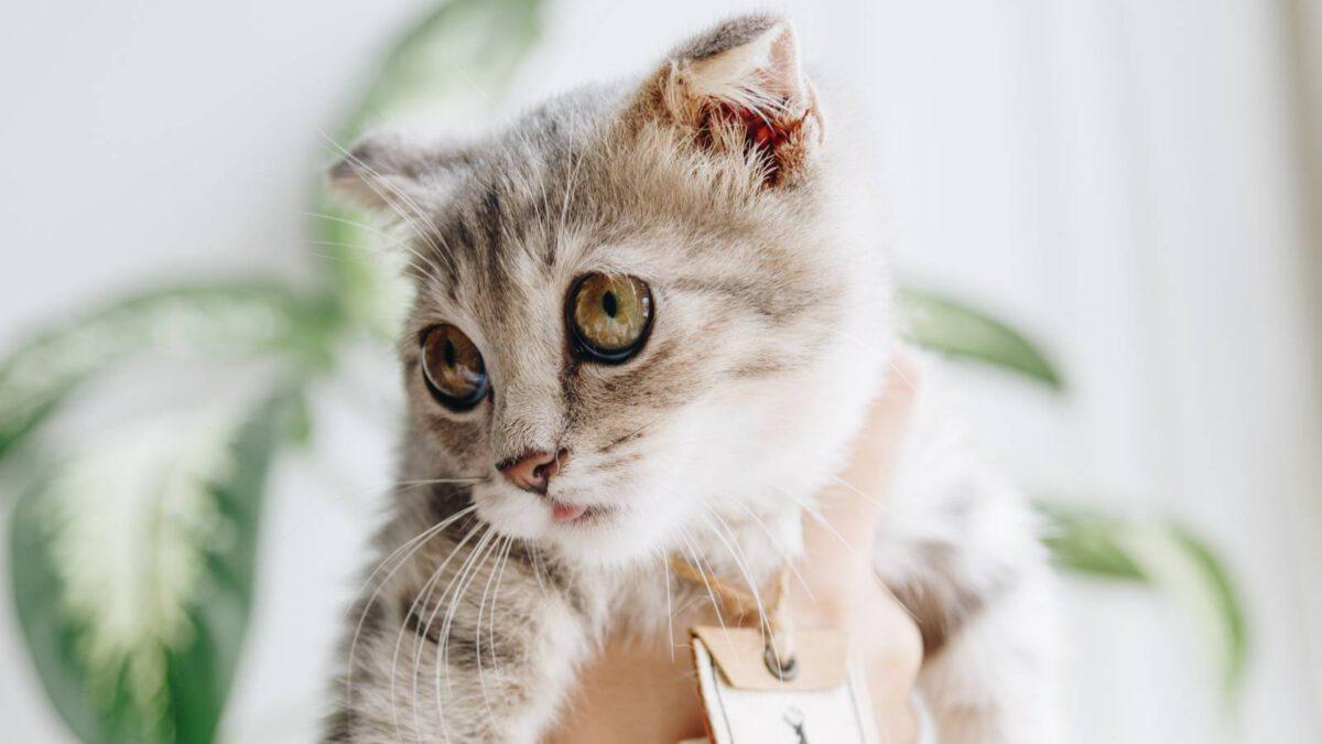 Jak je to s kočkami v nájemním bytě TIP#075