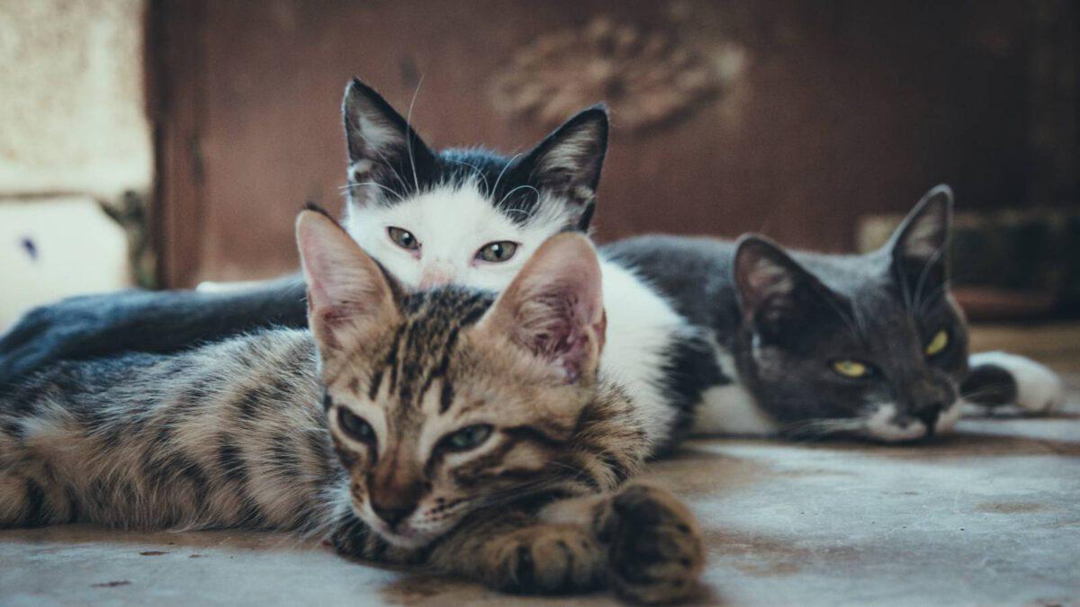 Je lepší jedna kočka nebo dvě? TIP#074