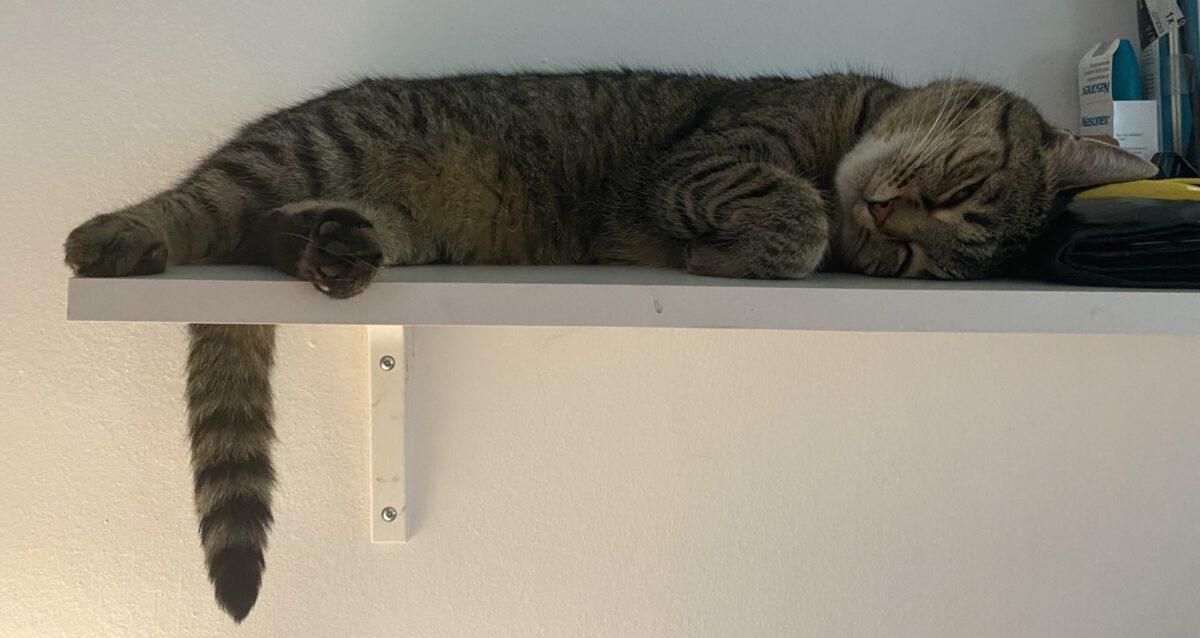 Jak poznat, že je vaše kočka spokojená TIP#077