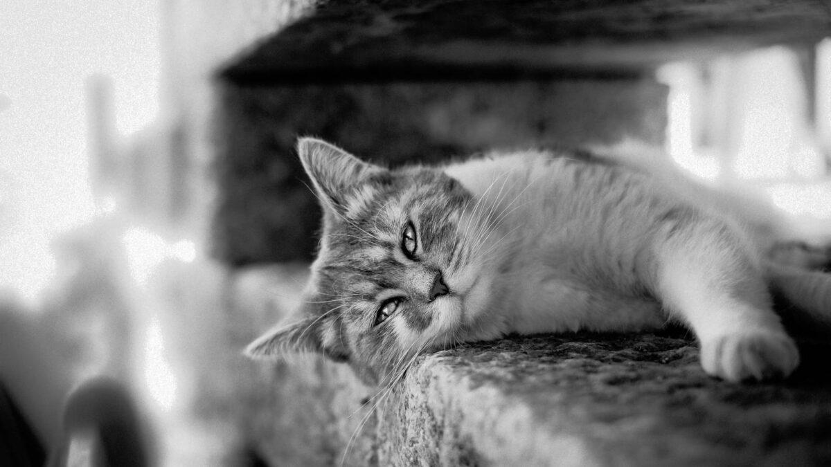 Co dělat s kočkou, která dělá potřebu jinde než má TIP#088