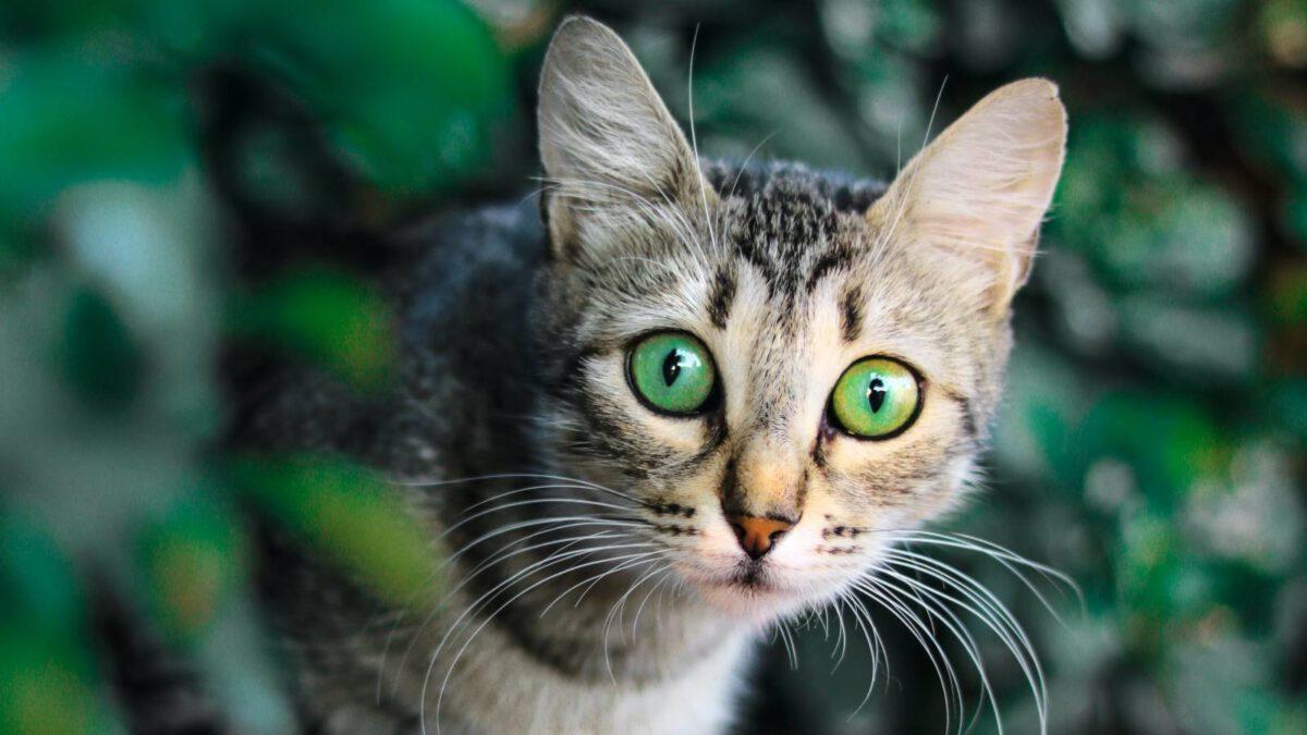 Kočky a rybičky v jedné domácnosti TIP#085