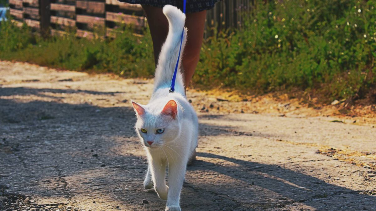 Mohu s domácí kočkou chodit ven? Jak na to? TIP#083