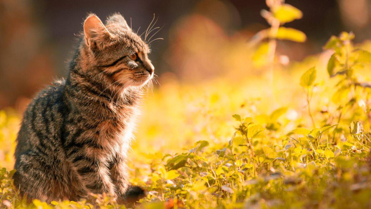 Kočky a hlodavci v jedné domácnosti TIP#086
