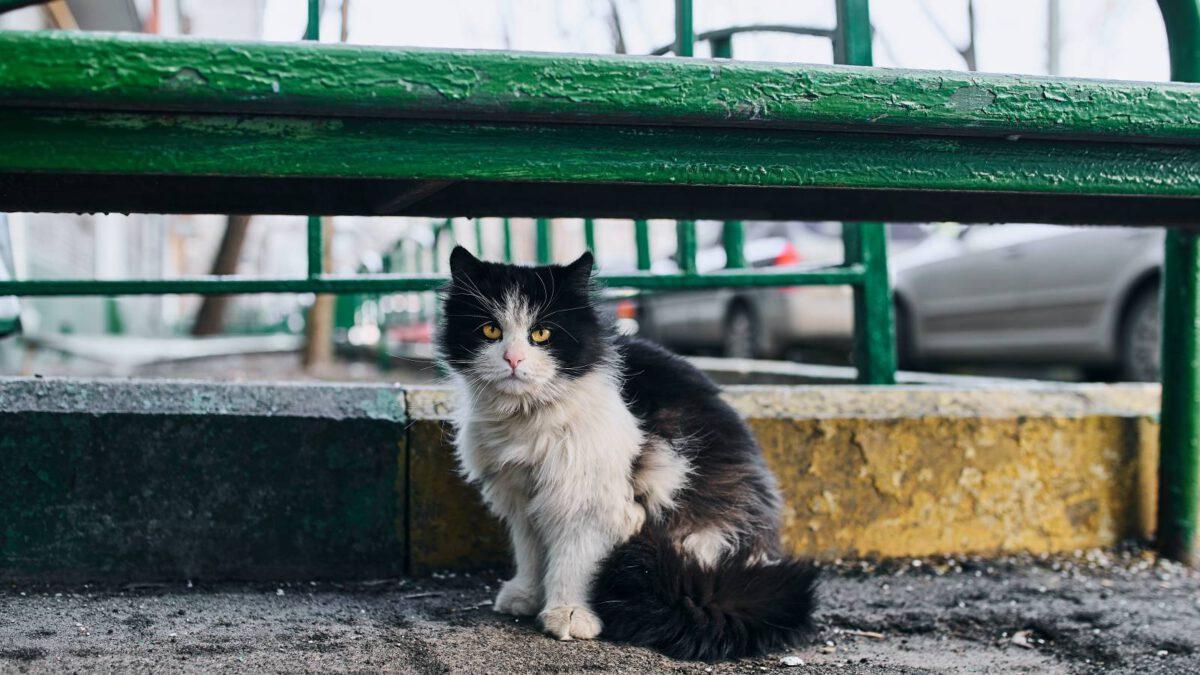 Jak na to, když si domu přinesete starší kočku z útulku TIP#091