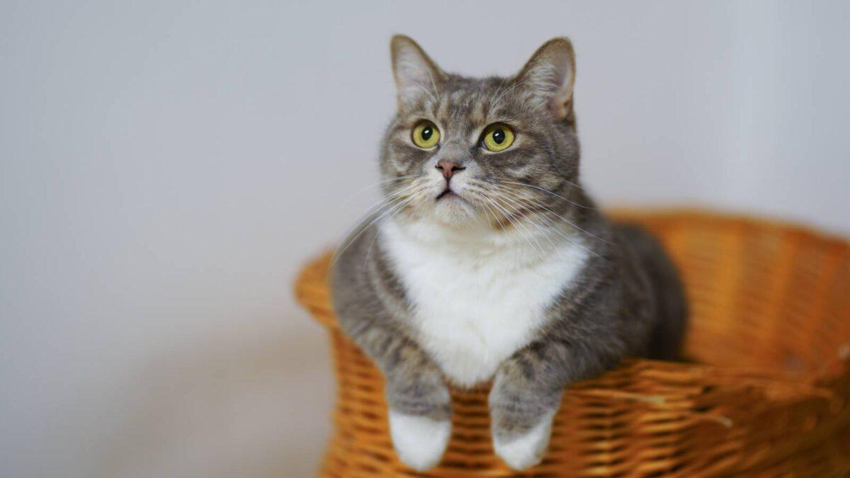 Jak přestěhovat kočku na nové místo TIP#089