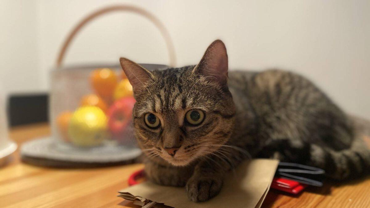 Pořizovat vitamíny a minerály pro kočky? TIP#100